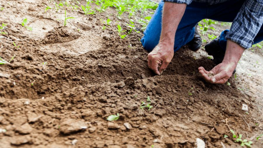 Man Planting Seeds 900x506