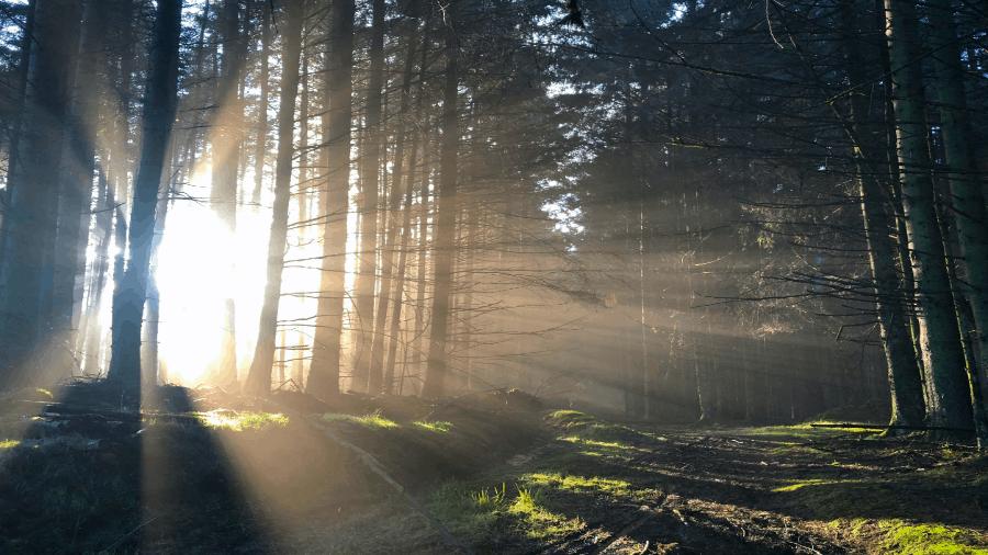 Light Shining Into Woods 900x506