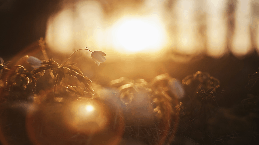 Light Shining On Flowers 900x506