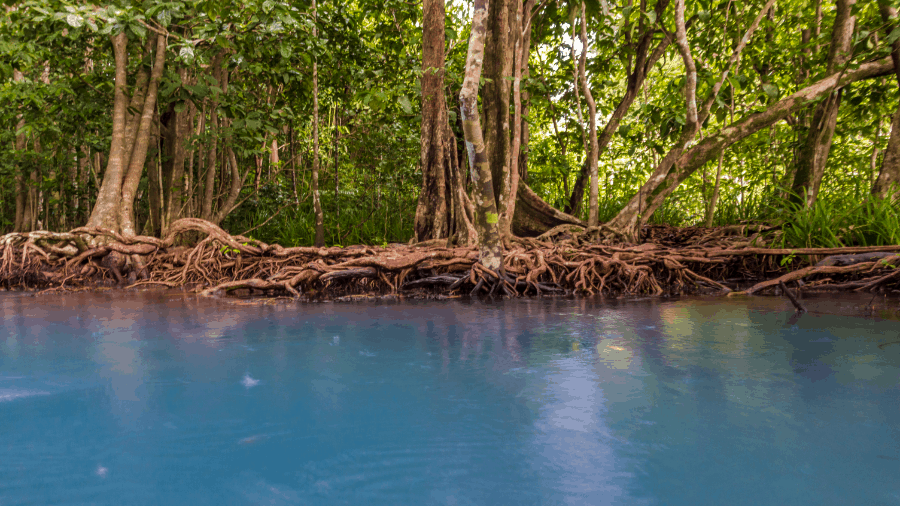 Trees Rooted Near Blue Water 900x506