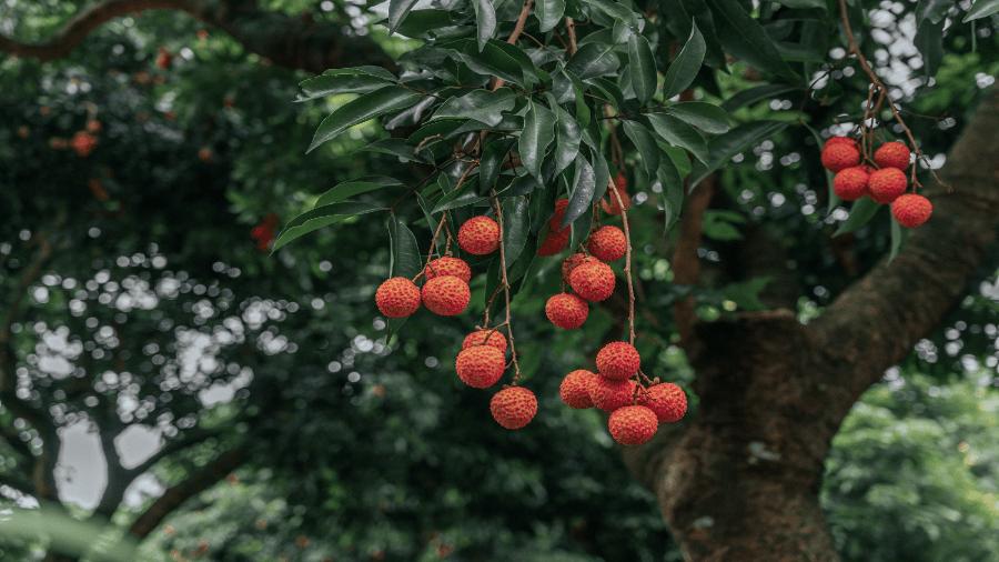 Fruit Tree 900x506