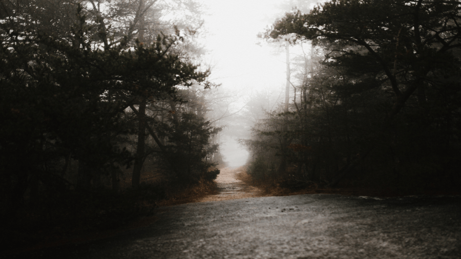 Woods With Fog 900x506